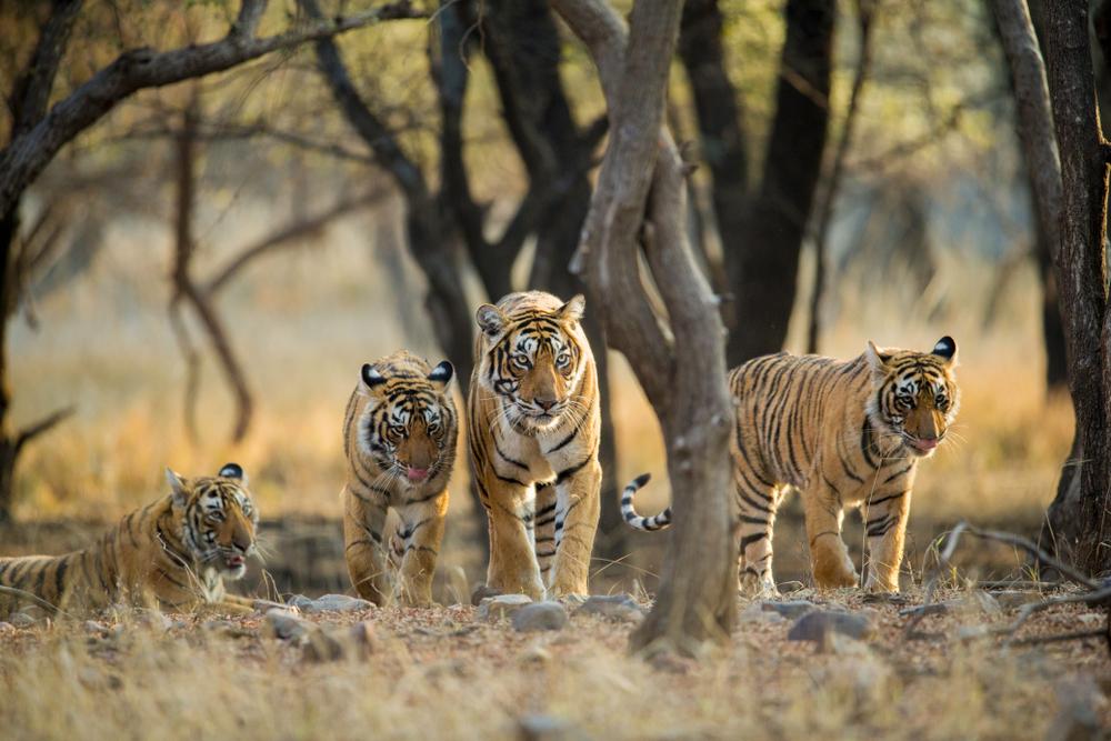Top 10 Wildlife Sanctuaries in India - Collections